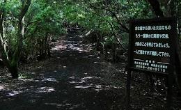 غابة أوكيغاهارا اليابانية المخيفة