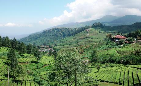 Tempat wisata agro gunung mas bogor