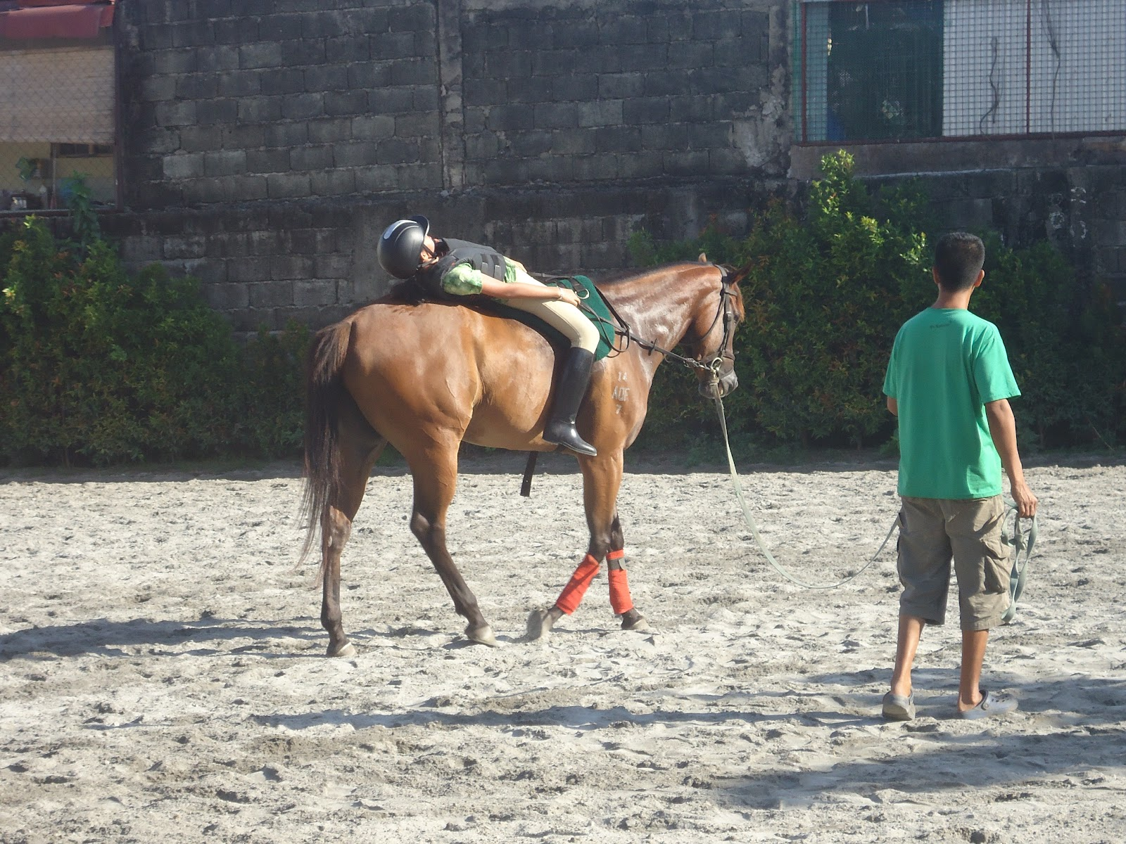 Horseback Riding Lessons For Adults Kitchener Waterloo