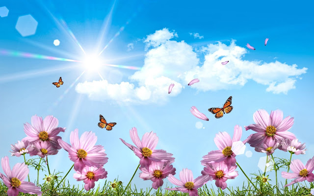Butterfly backgrounds 4