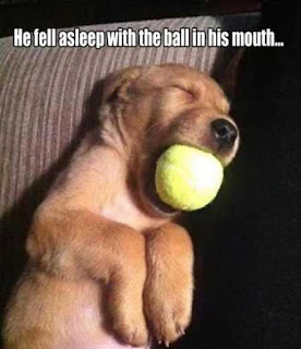 He fell asleep with the ball in his mouth