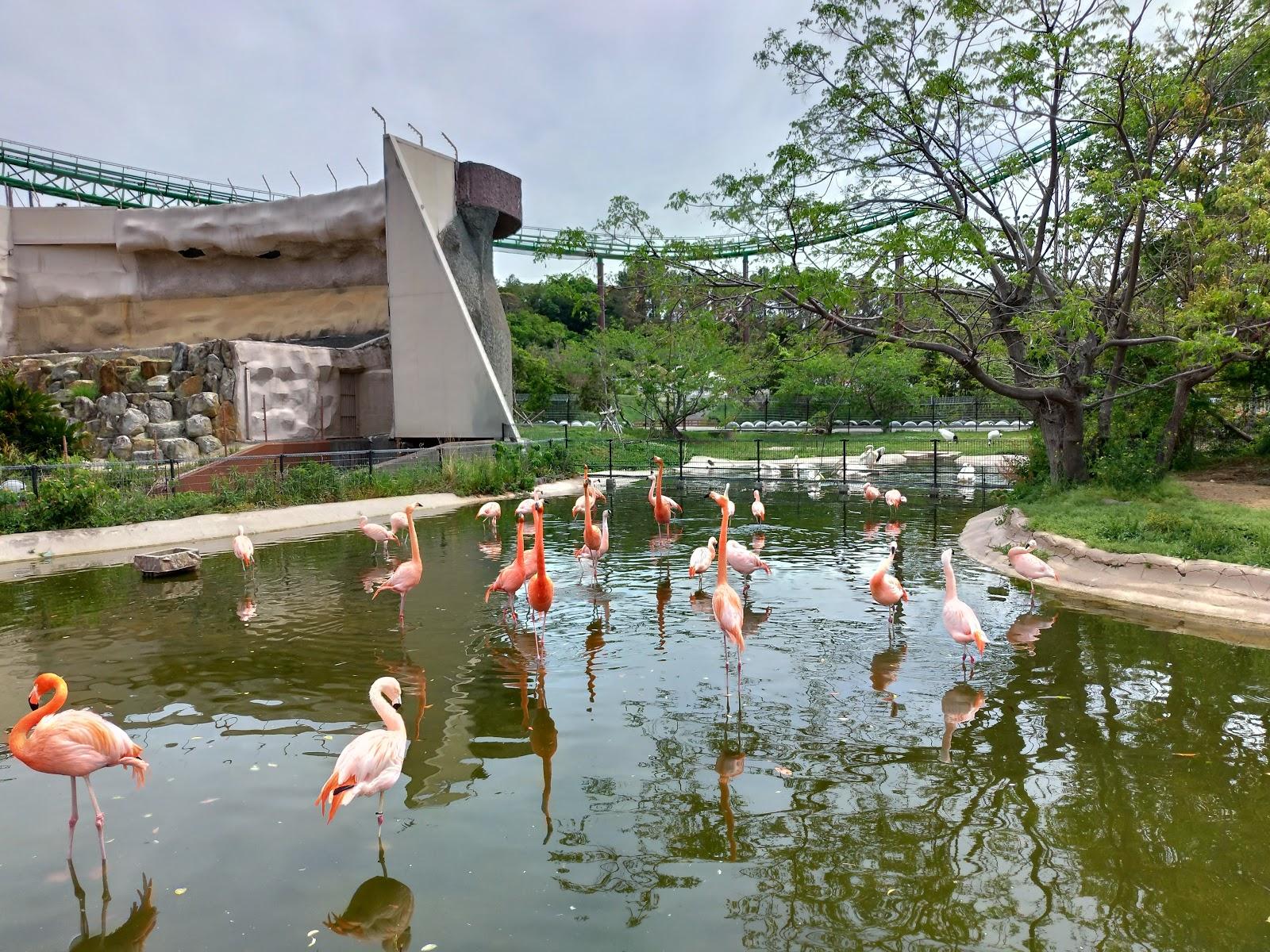 フラミンゴ|アドベンチャーワールド<前編>入場からふれあい広場をご紹介
