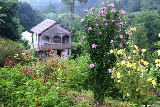 W poszukiwaniu relaksu i wyciszenia - Batumi Botanical Gardens