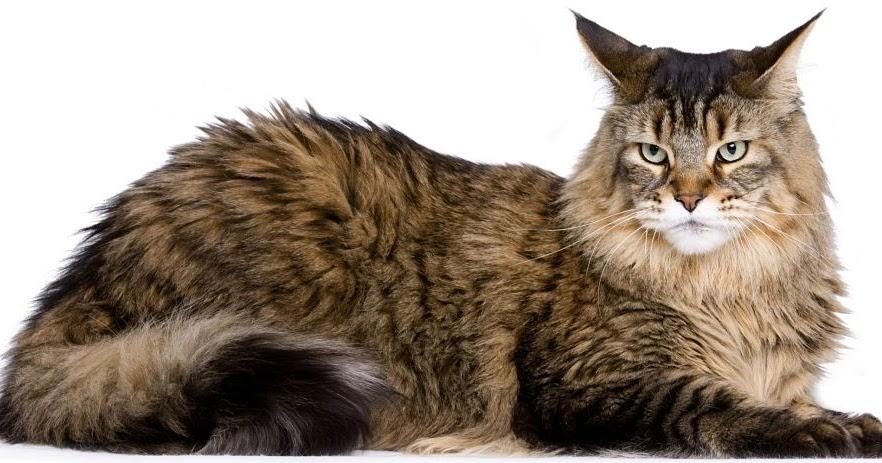Blog Pecinta Hewan Peliharaan Kucing Dan Anjing Sejarah