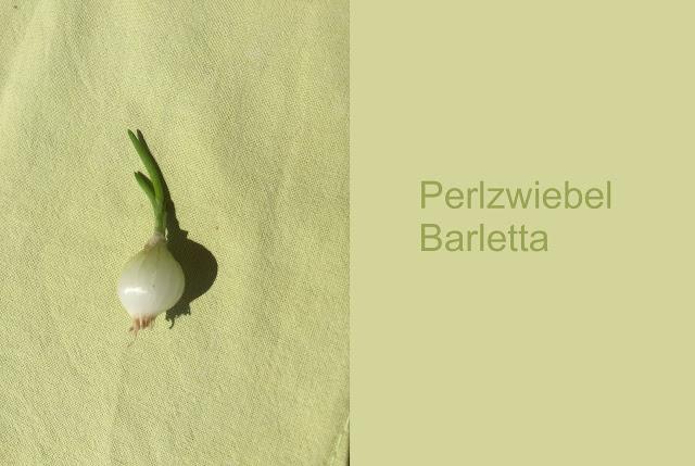 Perlzwiebel Barletta