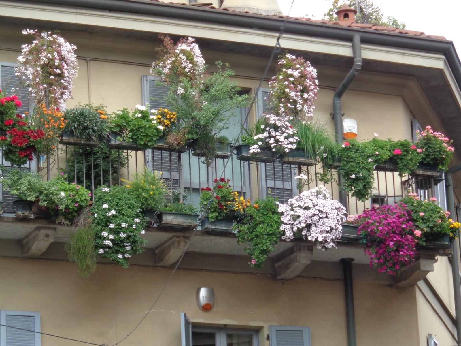 Balconi di milano foto diario di una giardiniera curiosa for Fiori e piante da balcone