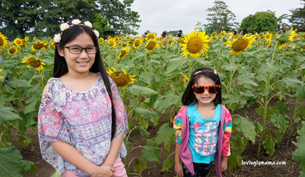 OISCA Sunflower Garden - sunflowers - uses of sunflowers - symbolism of sunflowers - family travel - mommy blogger - Bacolod mommy blogger - Negros Occidental