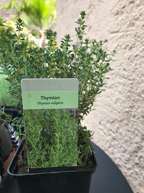 Thymian (c) by Joachim Wenk