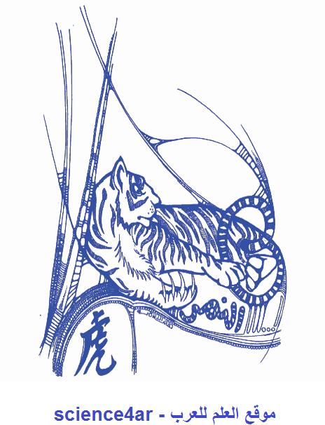 برج النمر من الابراج الصينية - كيف أعرف برجي - موقع العلم للعرب