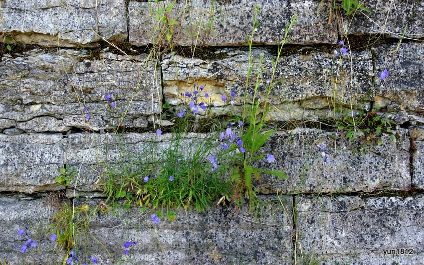 Кладка стены крупным планом