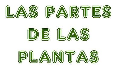 https://cplosangeles.educarex.es/web/quinto_curso/naturales_5/plantas_partes_5/plantas_partes_5.html
