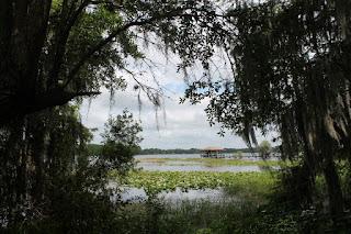 Tsala Apopka Lake
