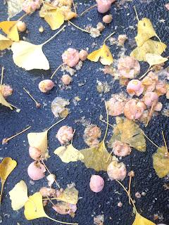 Ginko Früchte und Blätter im Herbst Boden riechen leider nach Erbrochenem