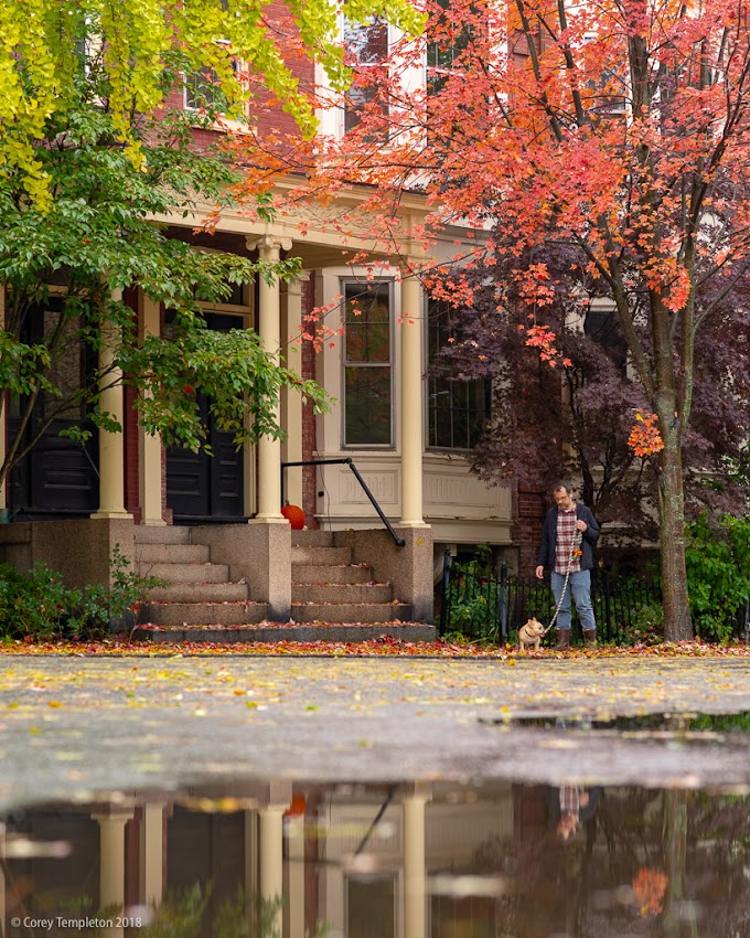 Portland, Maine USA October 2018 photo by Corey Templeton. Rain and autumn foliage at Emery and Pine Streets in the West End.
