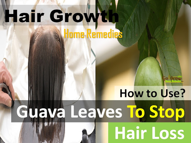 Guava Leaves to Stop Hair Fall, Guava Leaves for Hair Growth, how to get rid of baldness, fast hair growth, How to get long hair, how to stop hair fall, Benefits of Guava Leaves to Boost Hair Health,