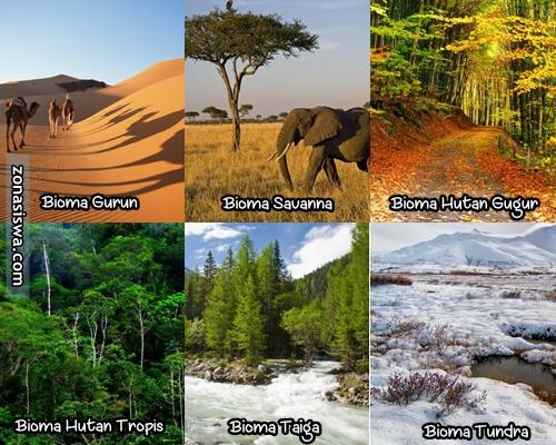 Ekosistem Darat Pengertian Jenis Ciri Ciri Gambar