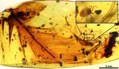 Ανακαλύφθηκαν τα πρώτα τσιμπούρια πάνω σε δεινοσαύρους