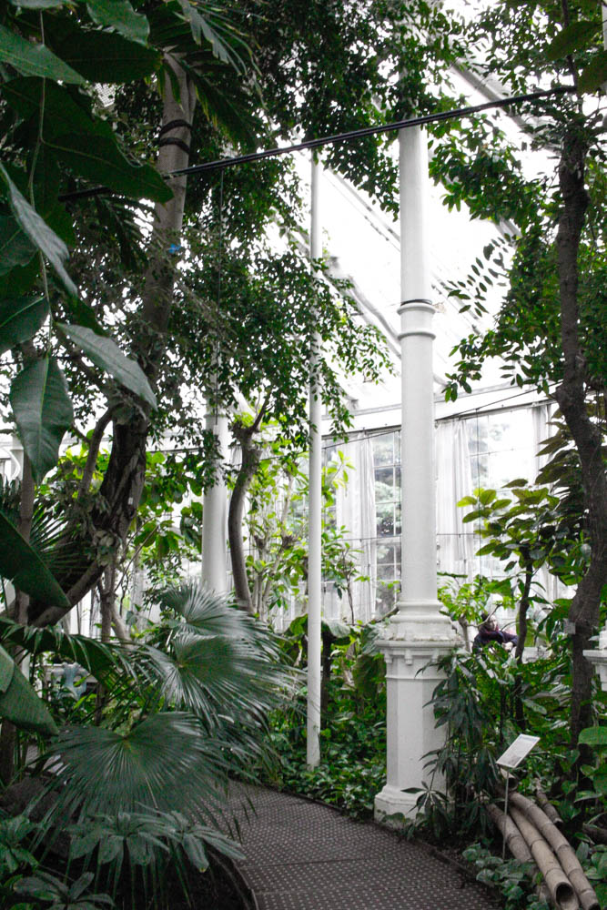 things to see, things to do, Copenhagen, blogger, copenhague, jardin botanique,