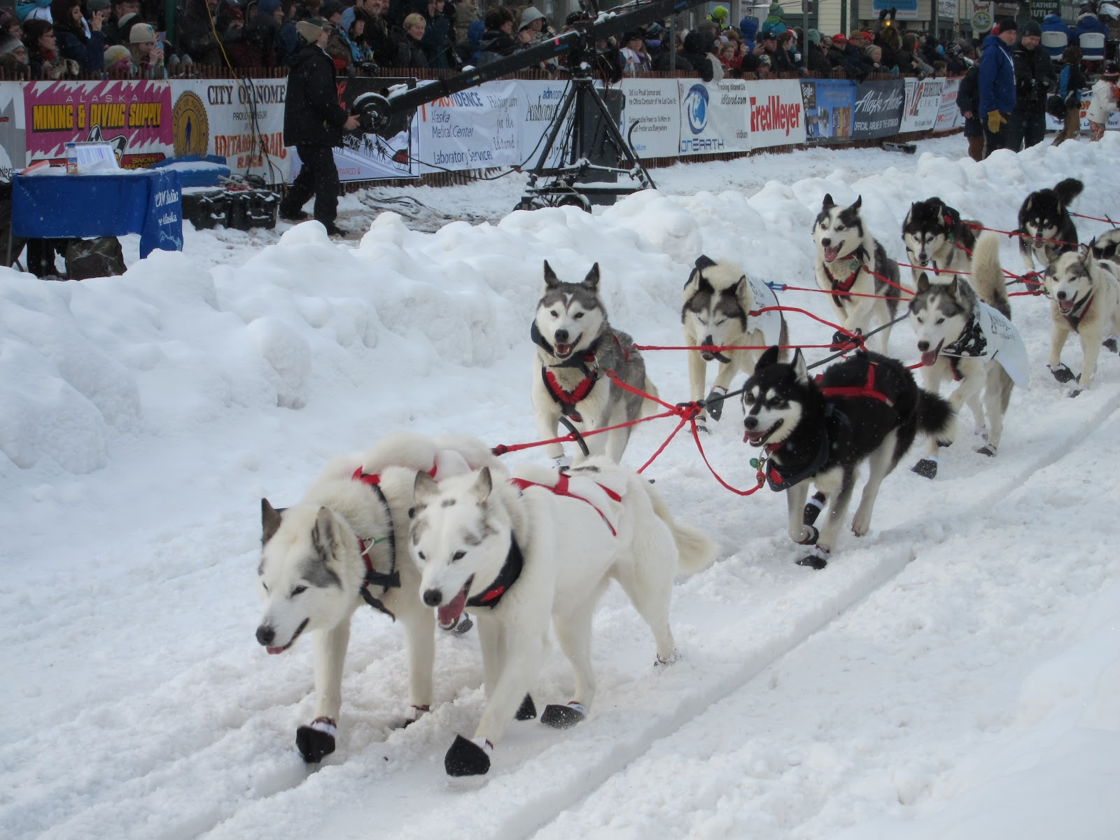 Life With The Luikens: Iditarod 2012: The Last Great Race ...