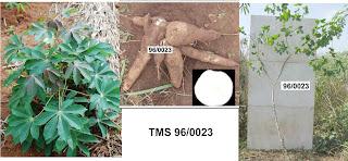 TMS 96/0023