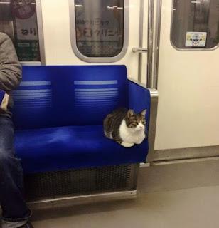 Quieren que las mascotas viajen en subte