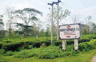 Hantapara Tea Estate, one of the gardens of Duncan Goenka Group