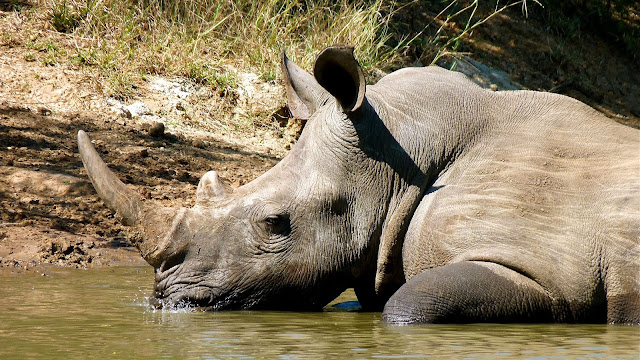 bougie en forme rhinocéros