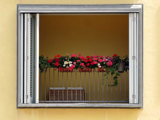 Covered balcony, flowers, Livorno