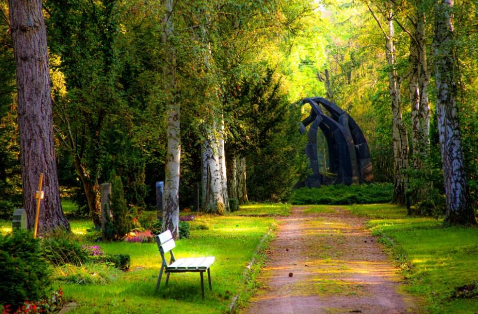 background foto pemandangan hutan dengan bangku