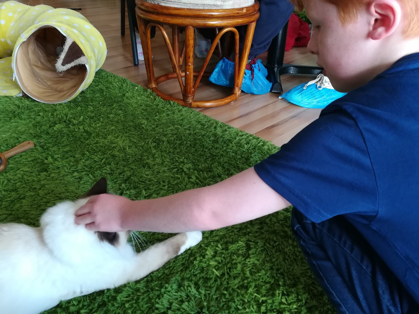 CatPawCino | Visiting a Cat Café in Newcastle with Kids - stroking a cat
