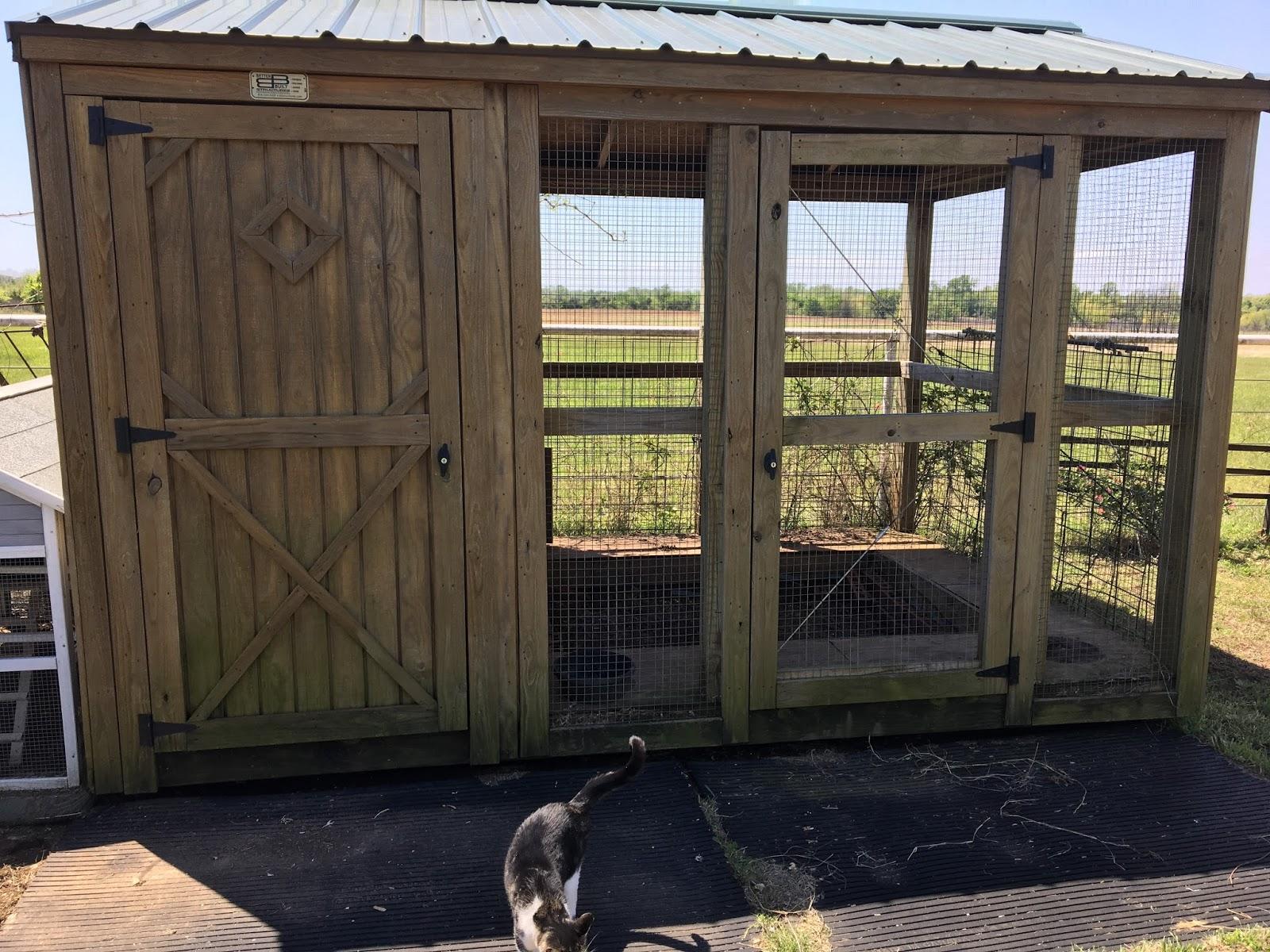 surrey hills farm: big chicks now??