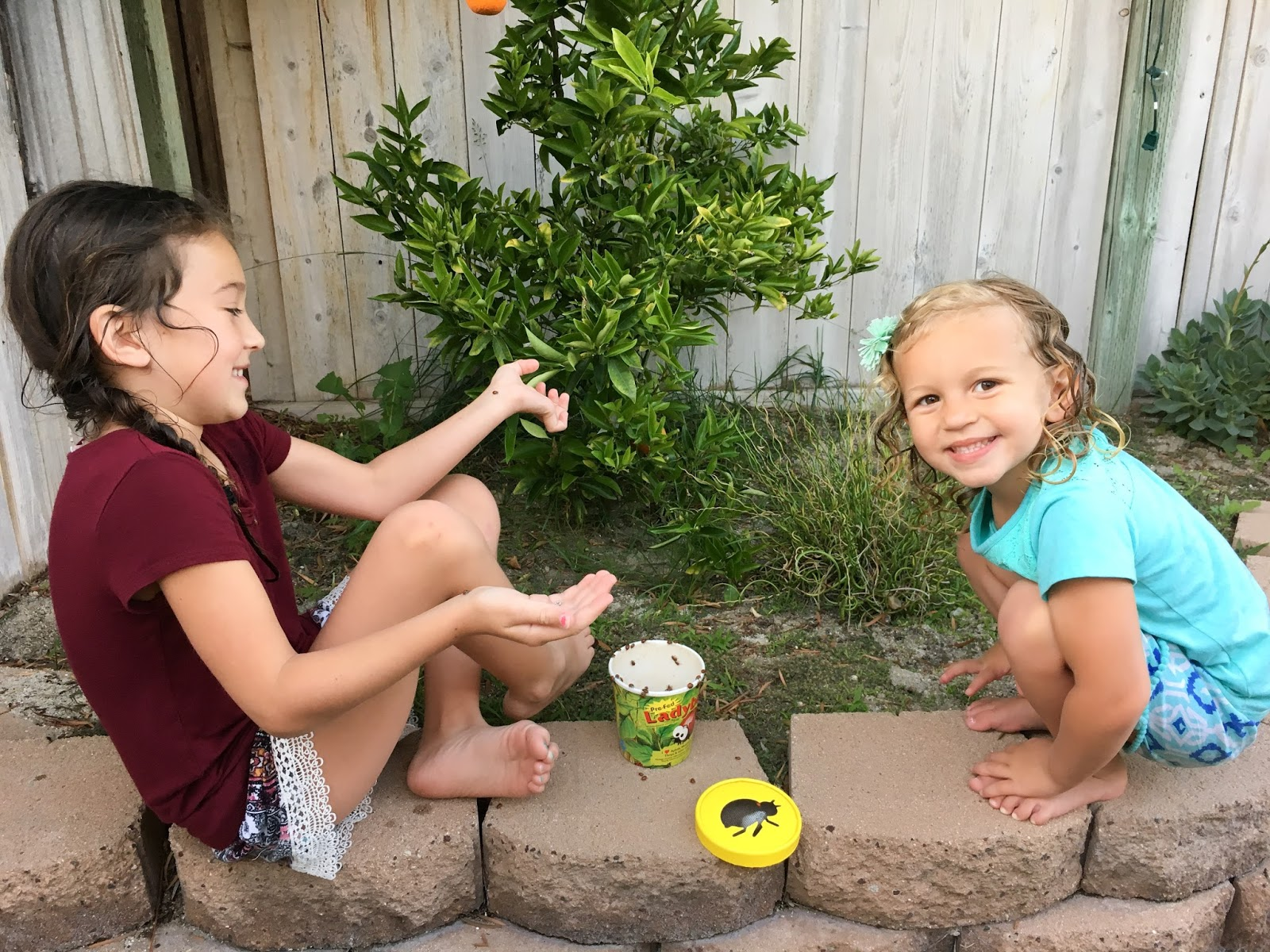 releasing ladybugs a fun activity for kids and families crafty