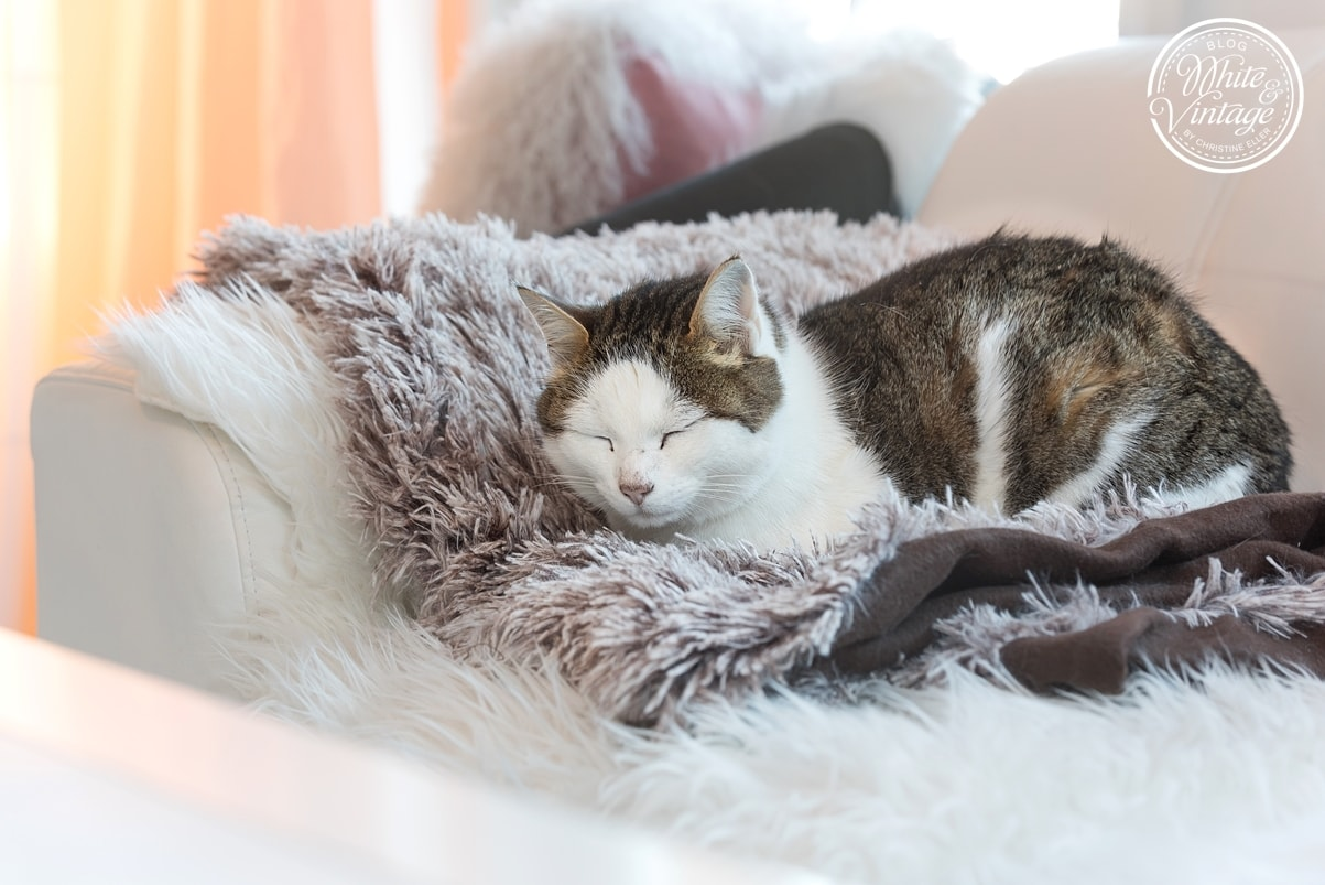 Kuschelige Felle und warme Wolldecken sorgen für Gemütlichkeit im Wohnzimmer.