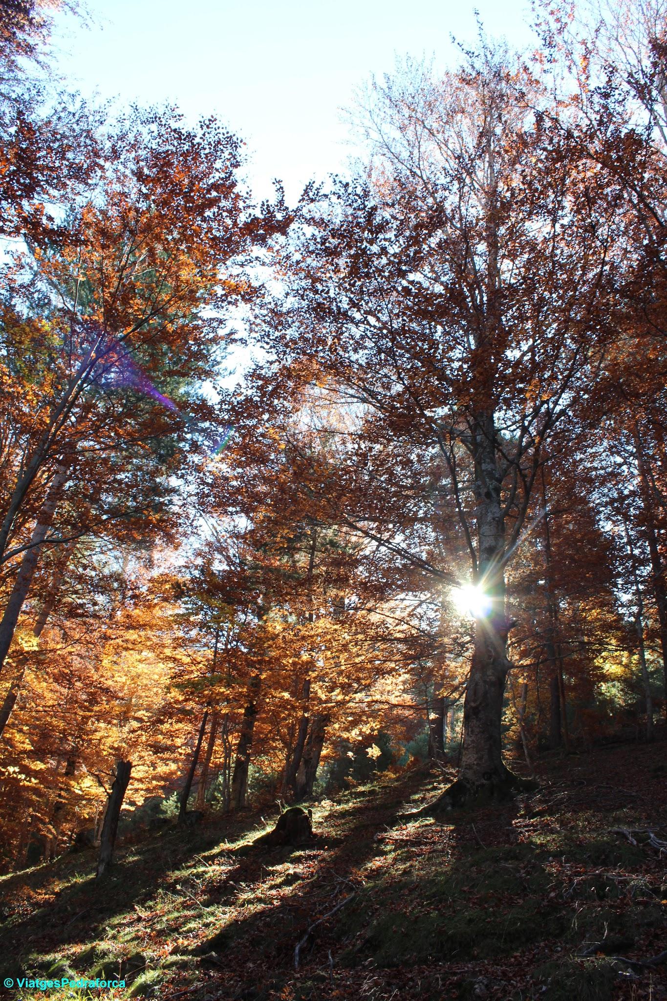 Valle de Hecho, Val d'Echo, Parque natural de los Valles Occidentales, colors de tardor, senderisme, Pirineu Aragonès