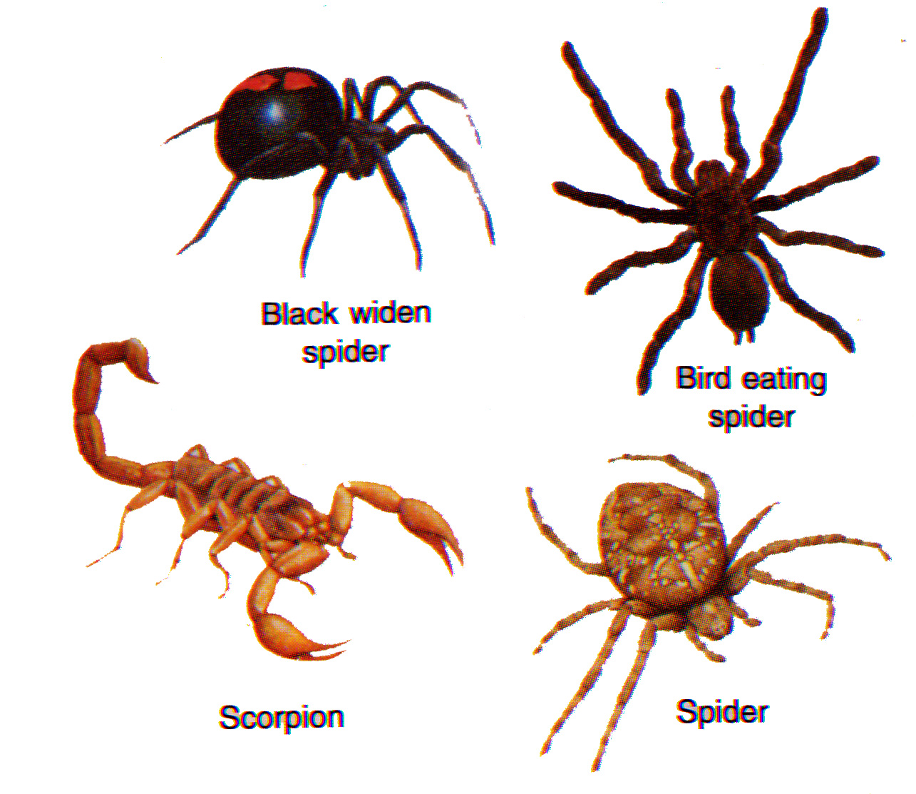 interesting arthropods