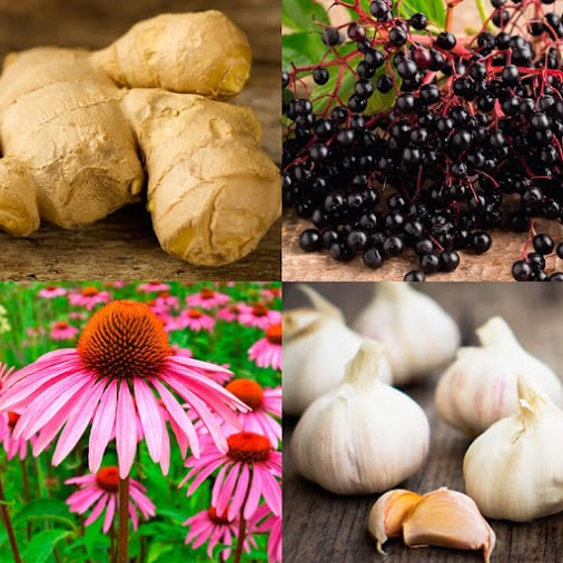 Use Antiviral Herbs to Boost Immune System and Fight Infection  What Is a Virus?  A virus is a small...
