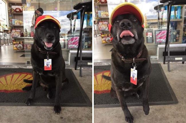 Gặp gỡ chú chó bán xăng cute nhất hệ Mặt Trời