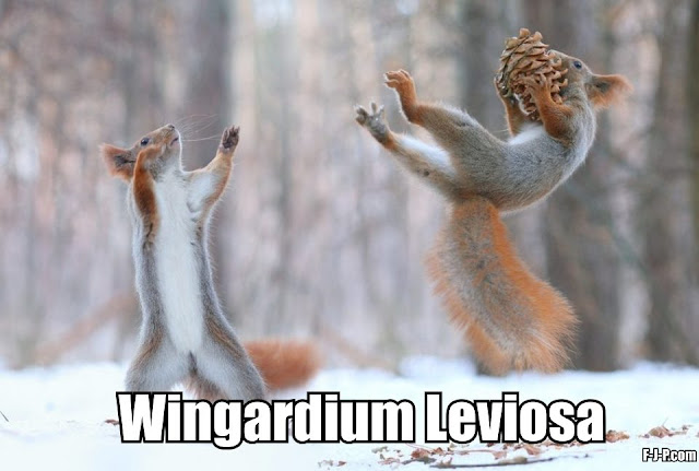 Funny Wingardium Leviosa Levitating Squirrel Meme Joke Picture