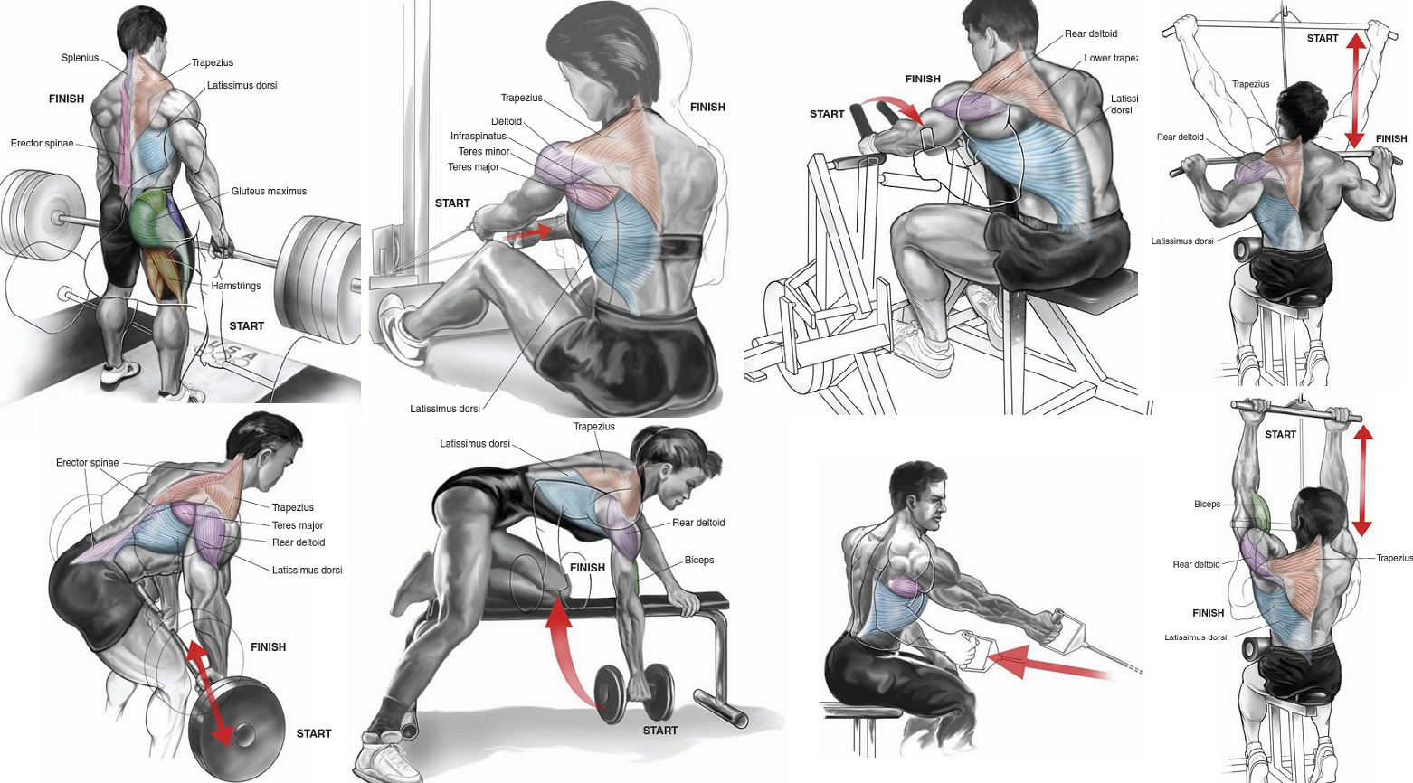 best back workout for mass