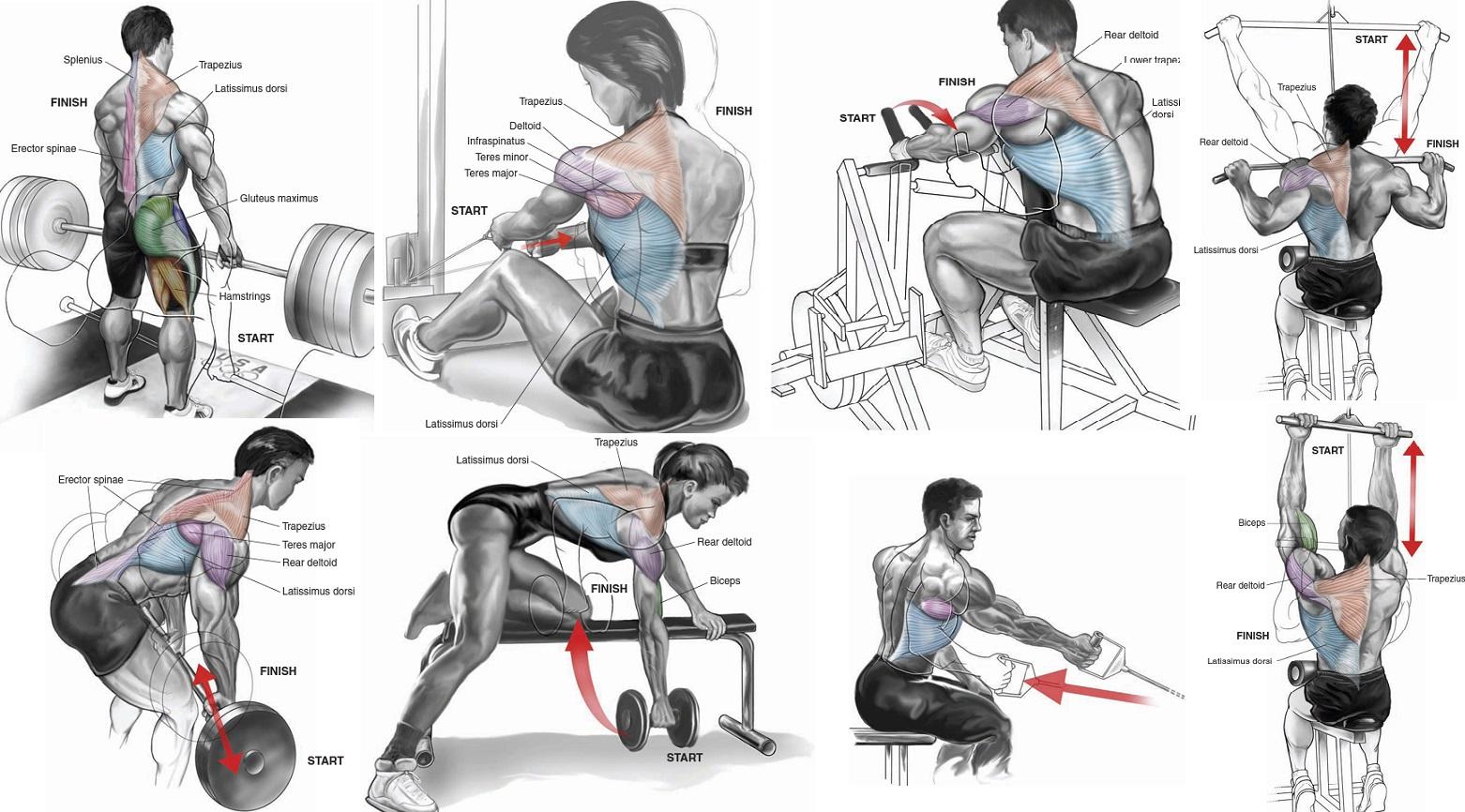 The Best Upper Back Workout For Mass All Bodybuilding Com