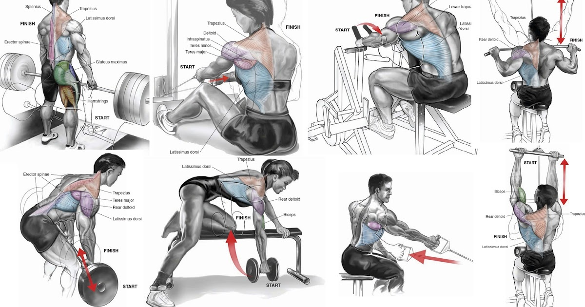 The Best Upper Back Workout For Mass multiple fitness