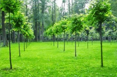 Δέντρα: Φυσική καλλιέργεια