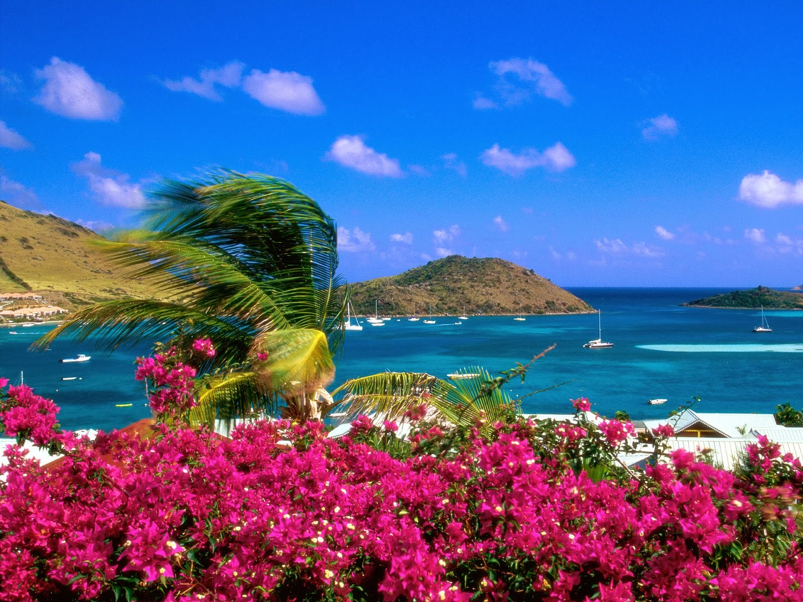 HD Beach Trees Live Wallpapers - Wallpapers Free