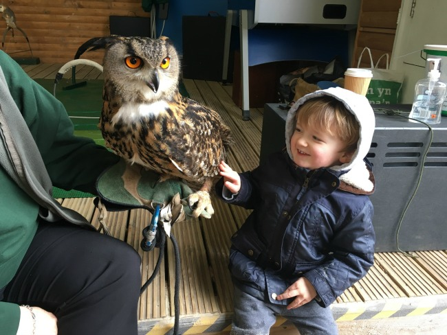 Our-Weekly-Journal-20-March-toddler-looking-at-an-owl