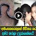 Snake bite kills child in Tissamaharama