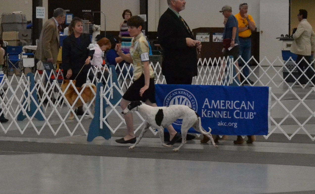 Rocky Mountain Cluster Dog Show  Results