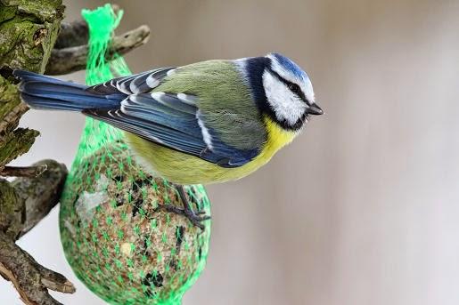 Pokarmy dla ptaków zimujących