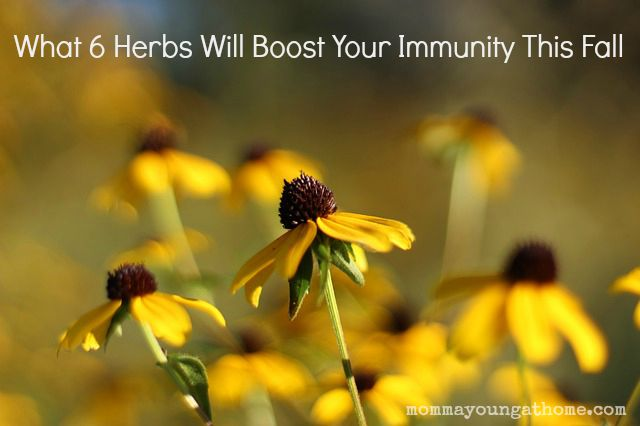 What 6 Herbs Will Boost Your Immunity This Fall