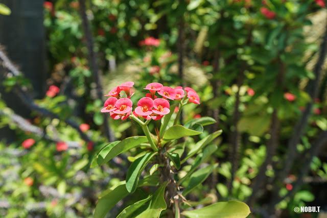 アロハガーデン館山・温室内の南国植物