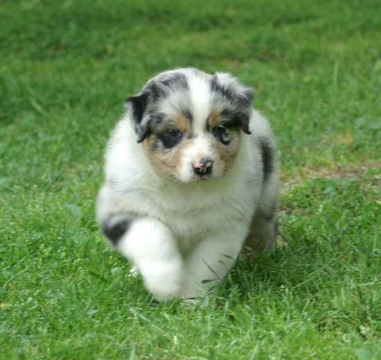 puppy pictures and information